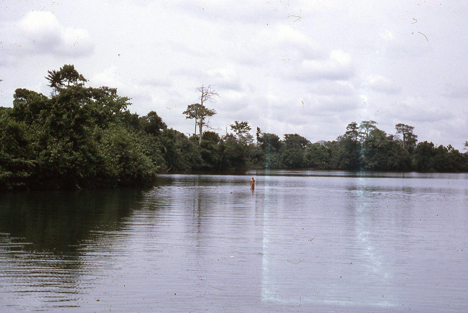 Le lac bleu très clair et plein de grandes  tortues