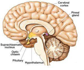 Notre glande pinéale ce 3ème Oeil d'Horus