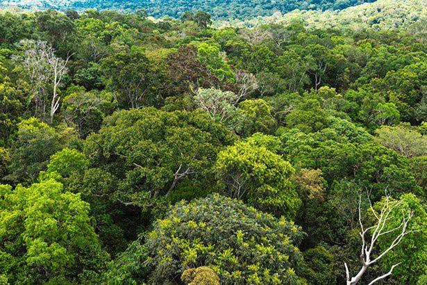 Une tribu amazonienne crée une encyclopédie de médecine traditionnelle