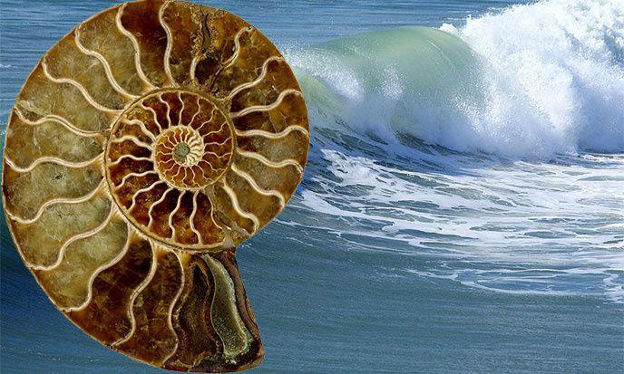 La spirale d'or