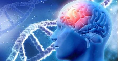 Notre ADN résonne avec notre Langage