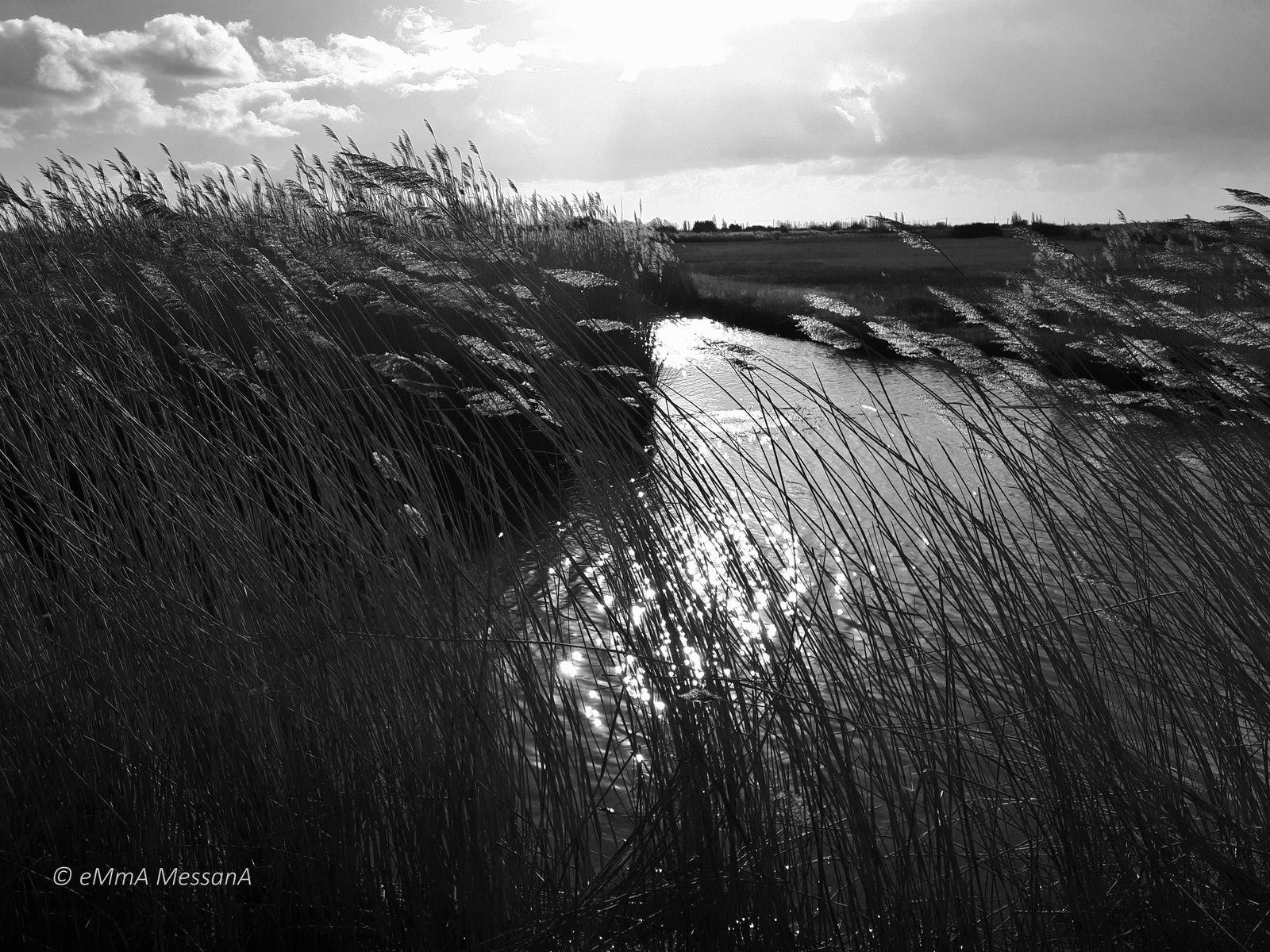 Saint-Urbain (Vendée), impression 4 du marais 27 janvier 2019 © eMmA MessanA