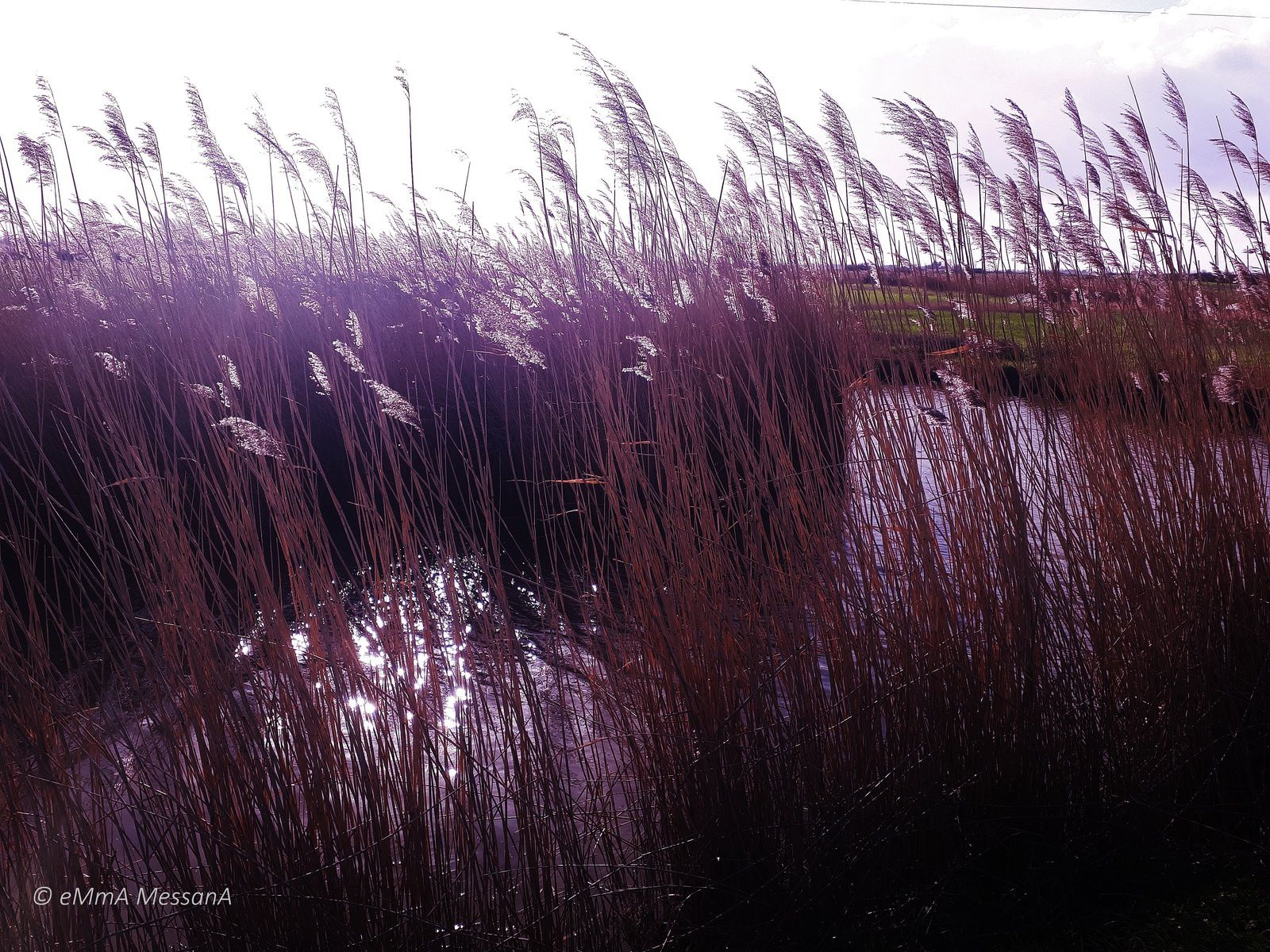 Saint-Urbain (Vendée), impression 3 du marais 27 janvier 2019 © eMmA MessanA