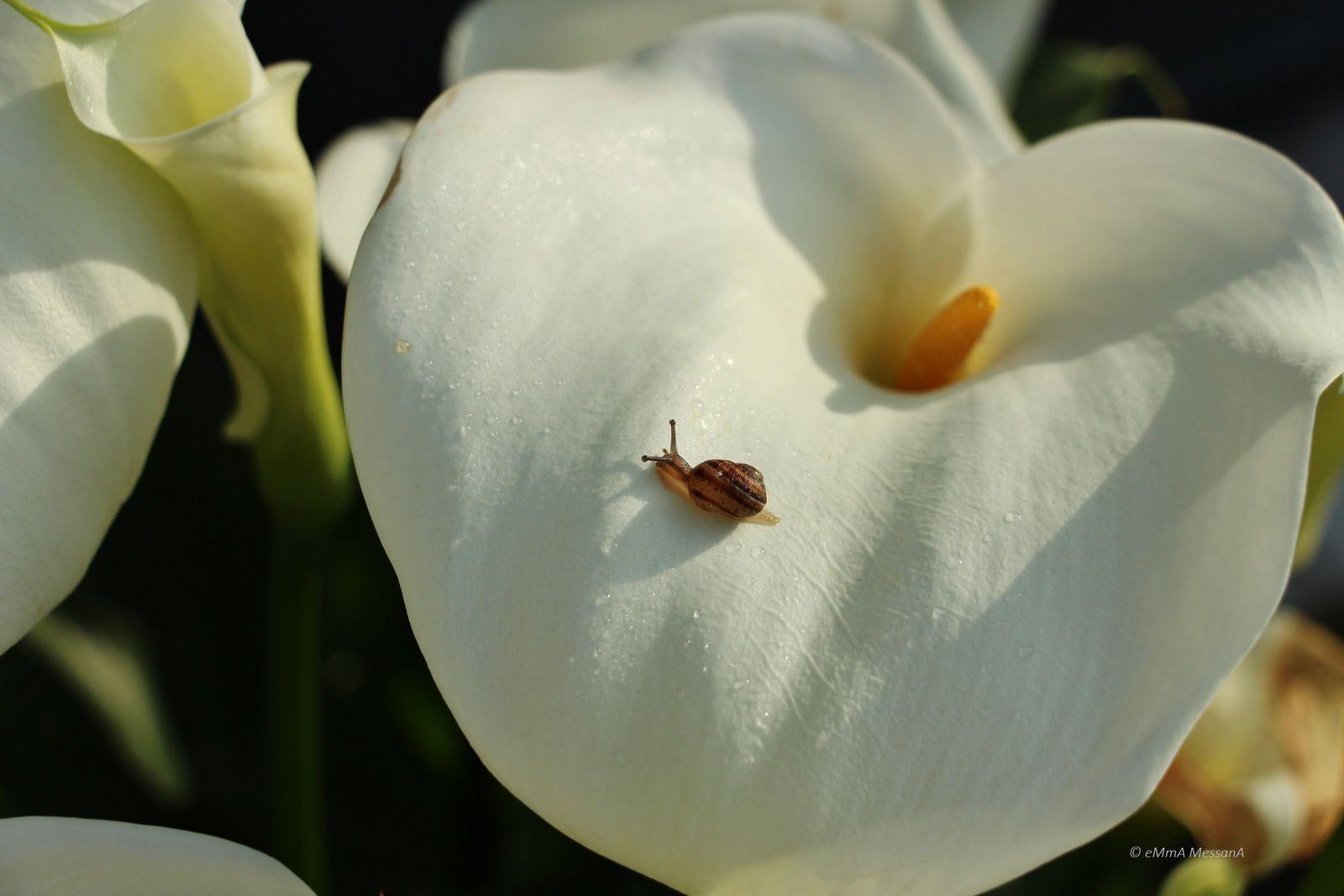 Saint-Urbain, un printemps au cours duquel les toutes petites choses étaient devenues de grande importance....
