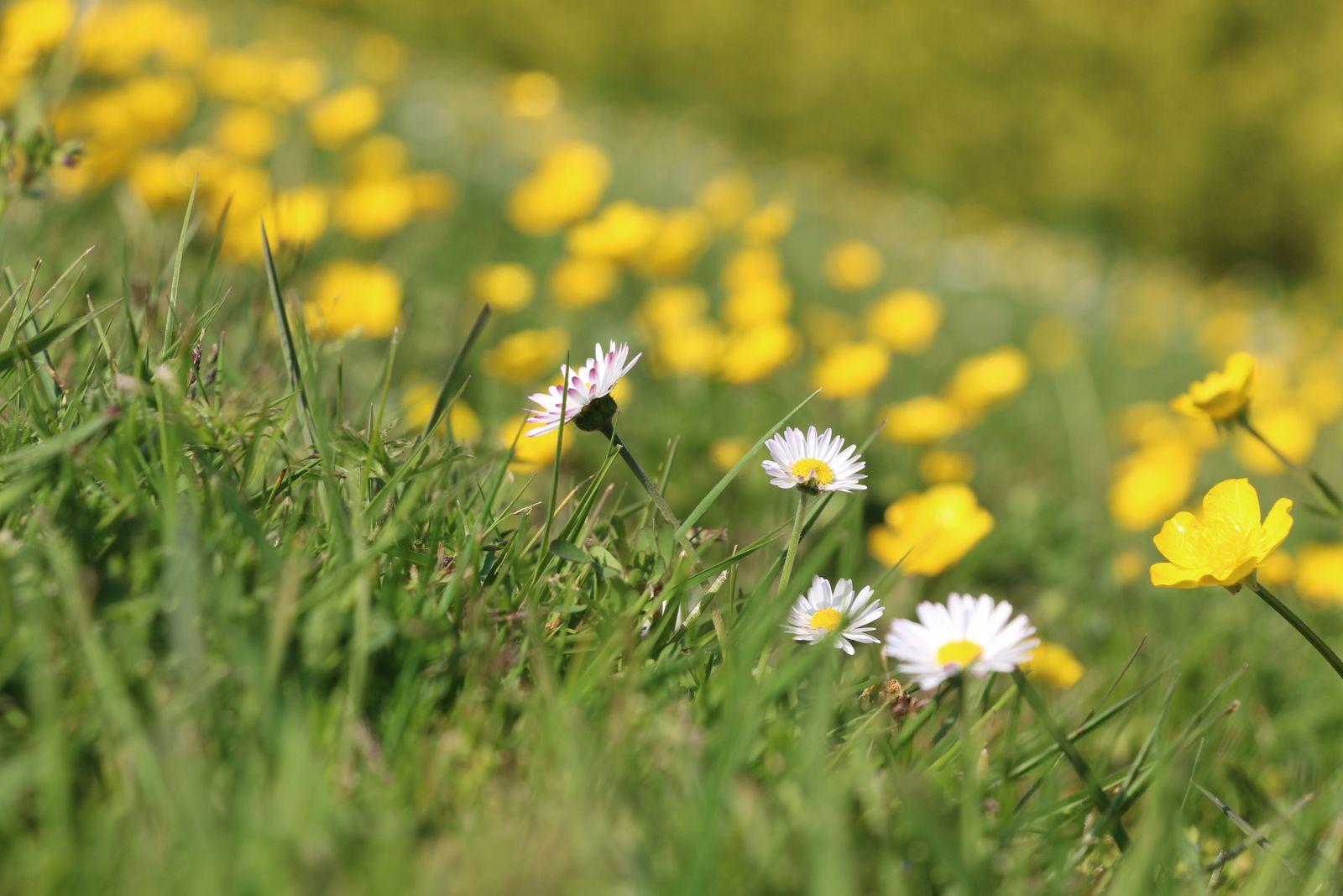 Dans mon jardin, printemps Saint-Urbain (Vendée), 8 avril 2020 © eMmA MessanA