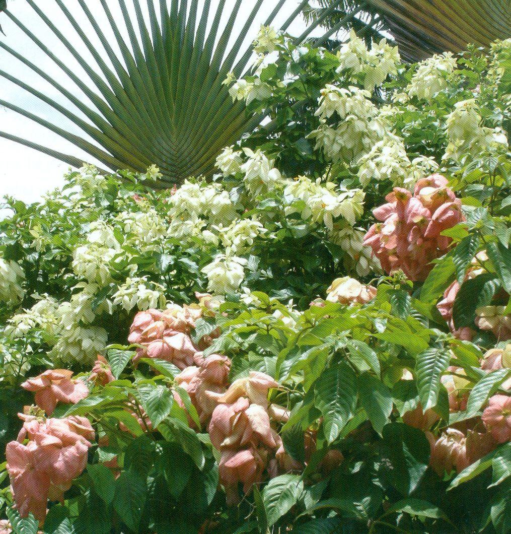 Douceur de quelques jardins créoles