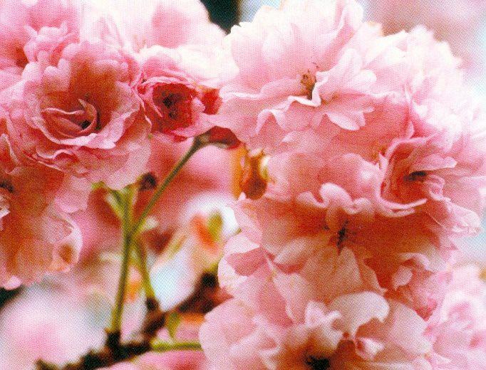 Symbôles du printemps
