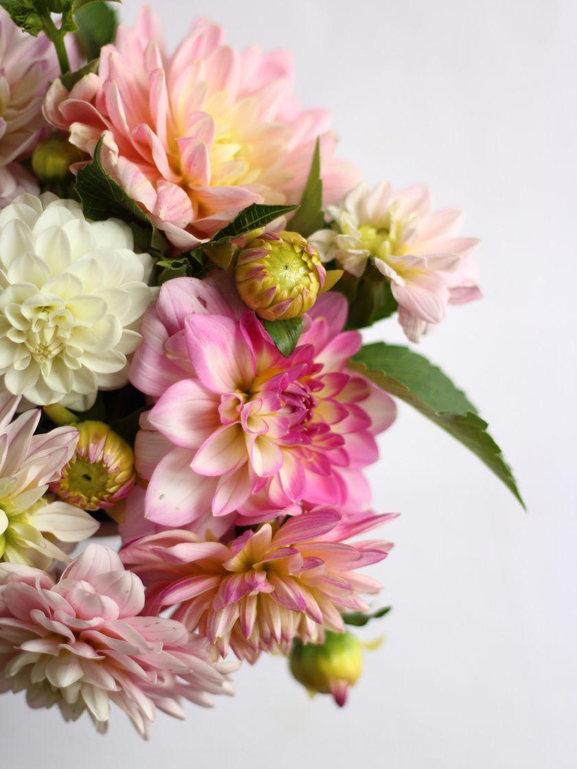 Tarte feuilletée aux figues-fruits rouges & ces petites fleurs à la crème chantilly