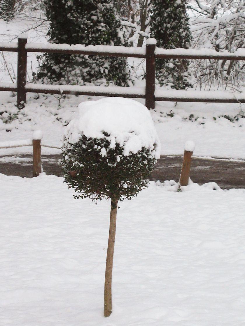 Nature et paysage sous la neige