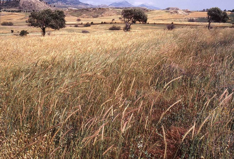 De choses et d'autres, sur Chypre