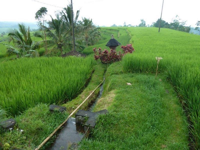 Âme d' Asie - pataugeons dans les rizières