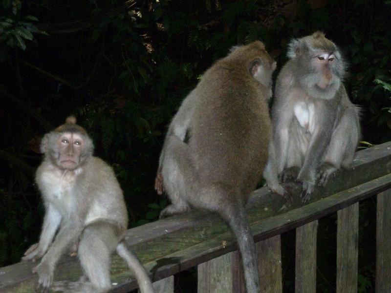 Âme d' Asie - Une journée dans la vie des singes