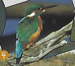 Les oiseaux des Marais - 1ère partie.