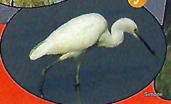 Les oiseaux des Marais - 2ème partie