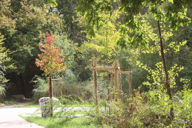 Le Parc Ausone - L'antre des sorciers
