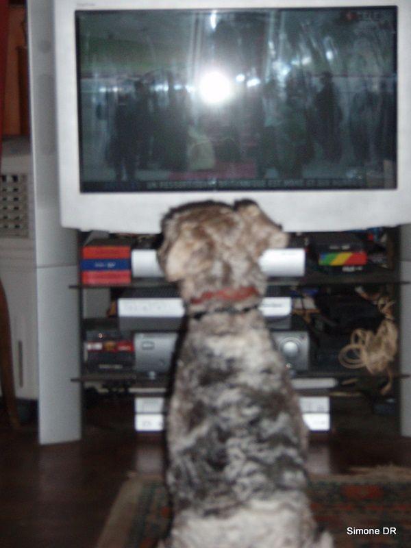 il y a quelques années, notre chien Victor s'intéressait à la télé.Oscar pas encore...sauf si un chien y aboie !