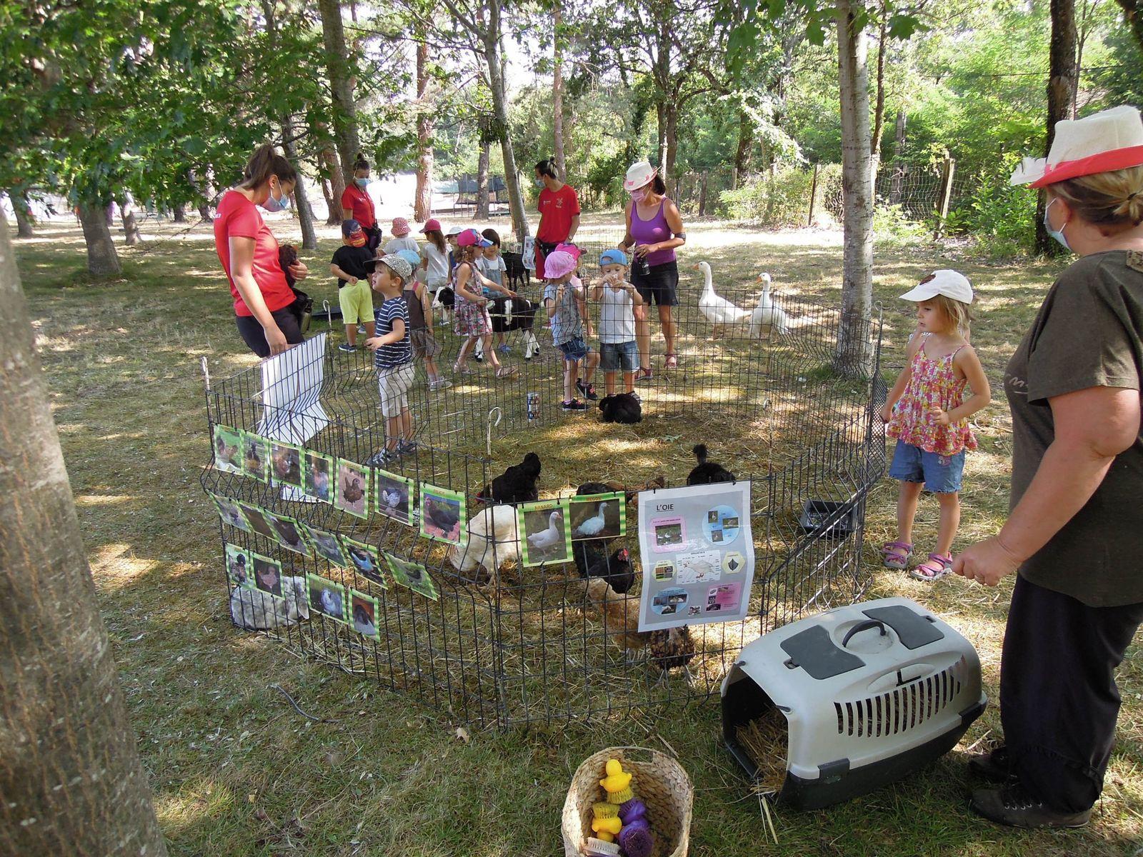 La ferme pédagogique a déplacé son porcelet, ses poules et ses oies au centre, pour la plus grande joie des petits. DDM.G.D.