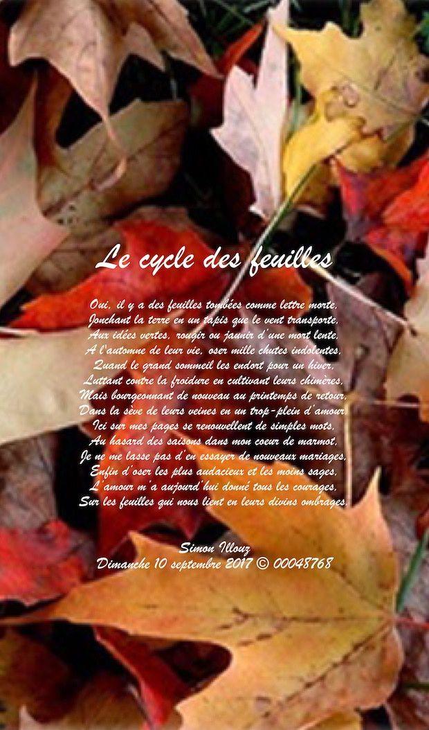 Le cycle des feuilles...
