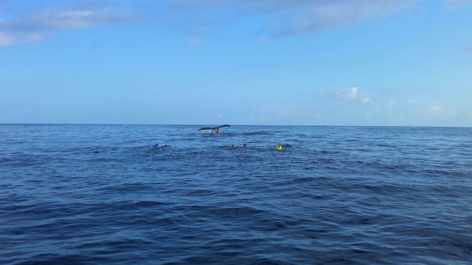 Sortie baleines (à bosse)!
