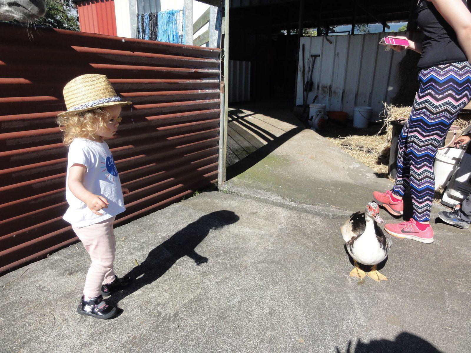 Sortie pédagogique de la crèche à la ferme de St Anne