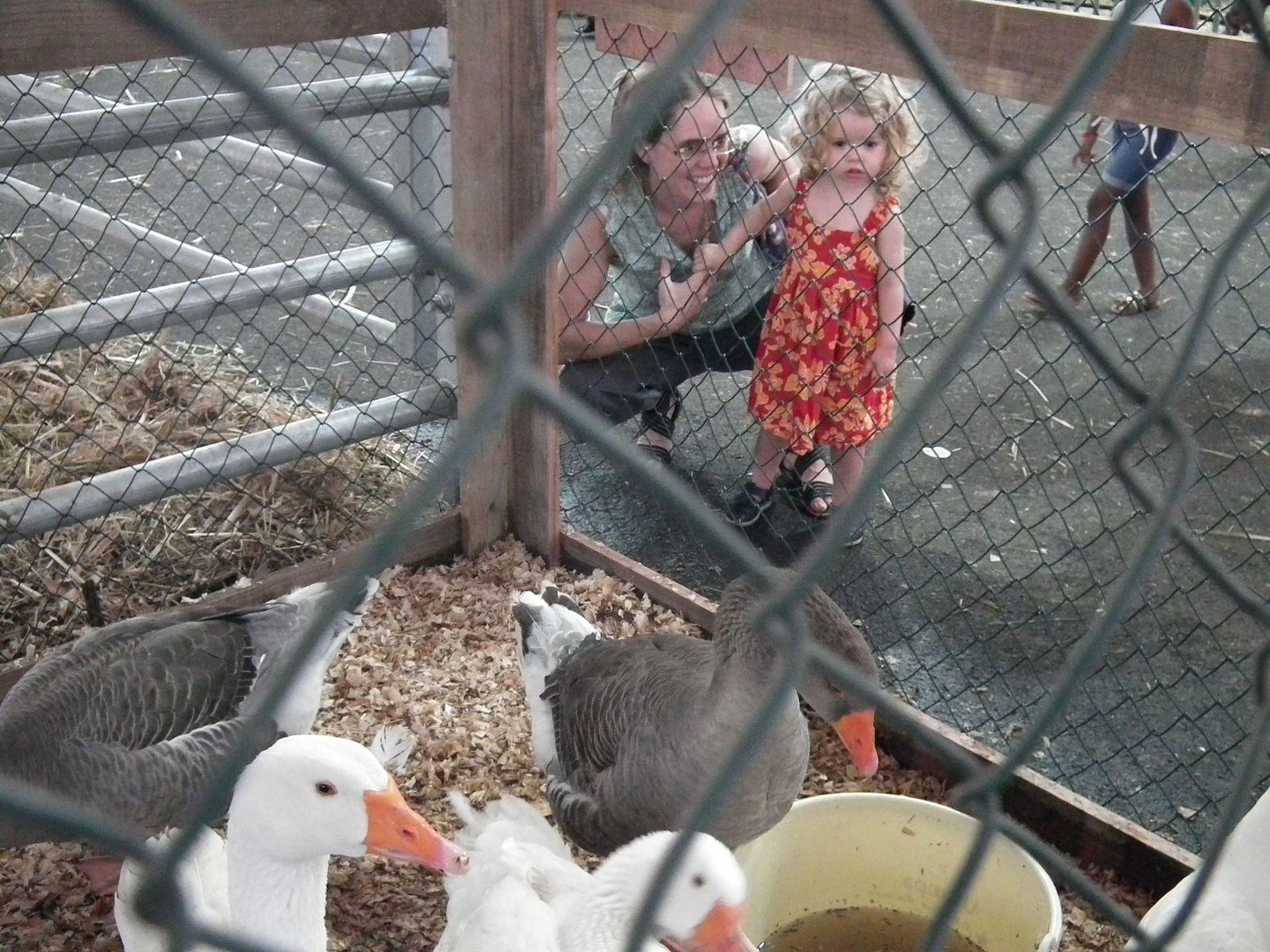 Madonie rend visite aux animaux