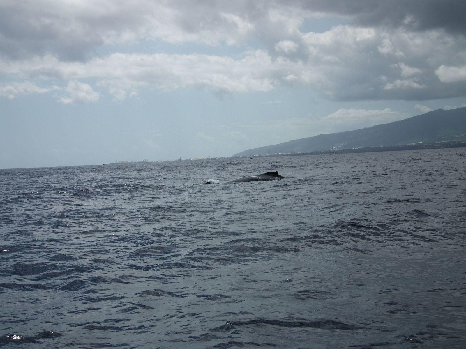 Madonie découvre les baleines dans leur habitat