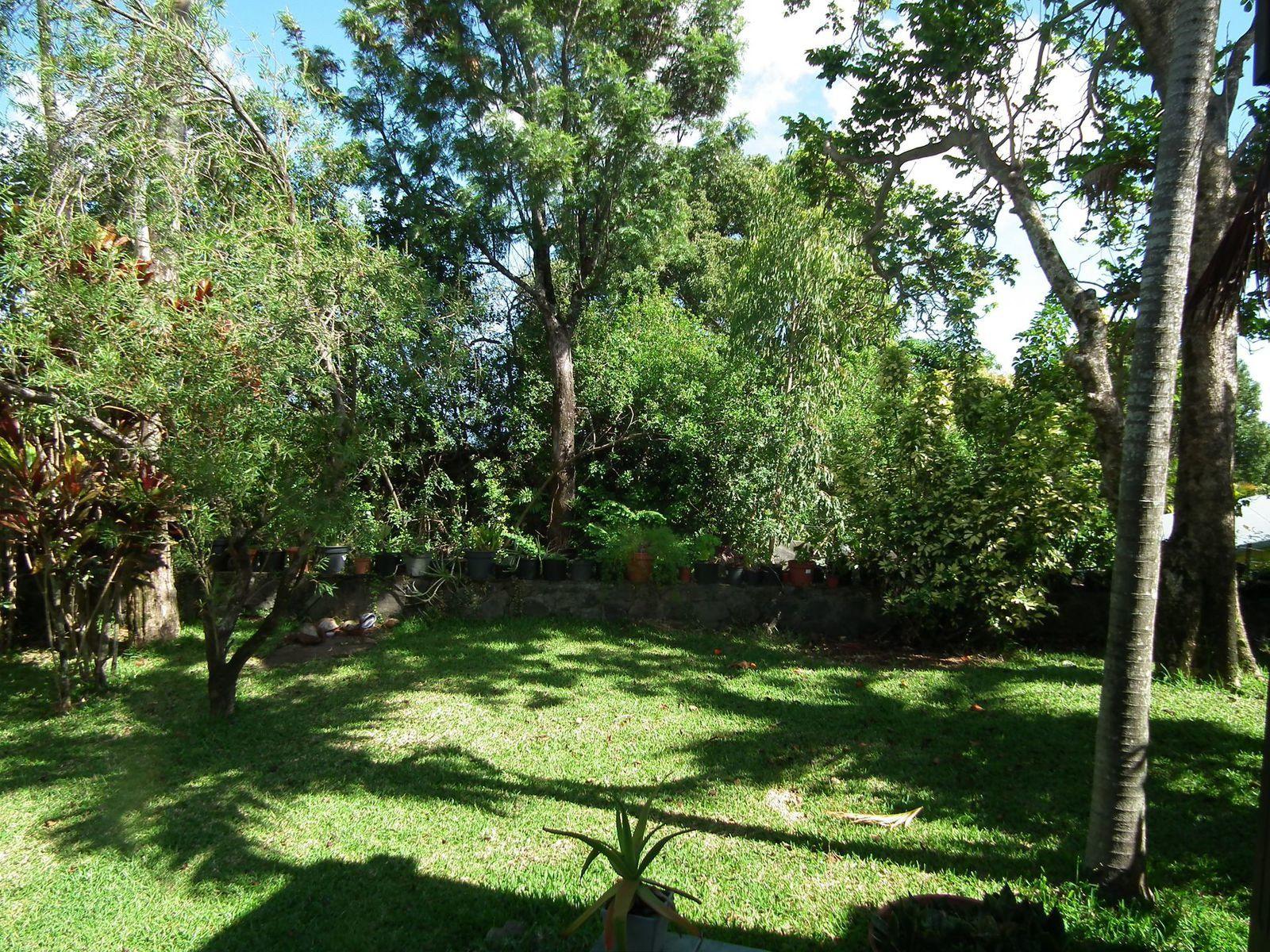 Jardin et ananas