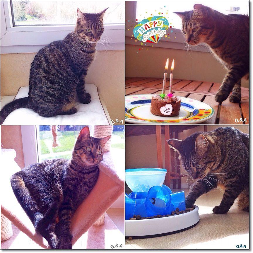 Happy Birthday ma choupinette ! Et en cadeau, une belle gamelle anti-glouton !