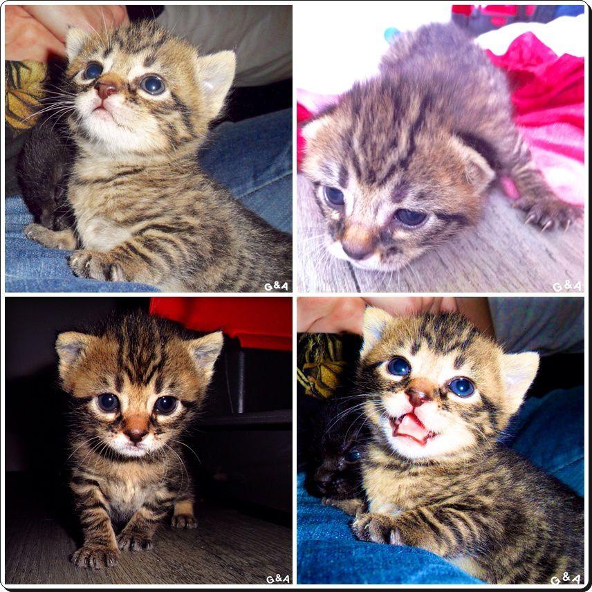Zhaan, arrivée à à peine 10 jours avec 2 frères et soeur, tous adoptés depuis !