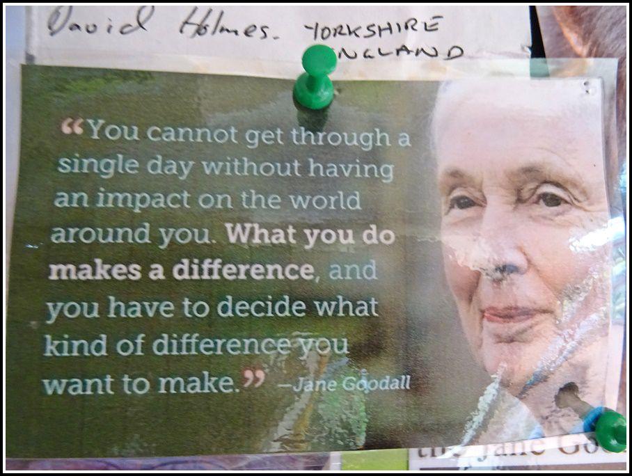 Jane Goodall, née le 3 avril 1934 à Londres, en Angleterre, est une pionnière dans les recherches sur les rapports humain-animal et s'investit depuis toute petite dans la préservation de la vie animale sauvage d'Afrique. D'une petite fille rêveuse, Jane a grandi pour devenir une scientifique aventurière doublée d'une activiste. Dre Jane Goodall est aujourd'hui une primatologue, anthropologue et éthologue reconnue à travers le monde entier.