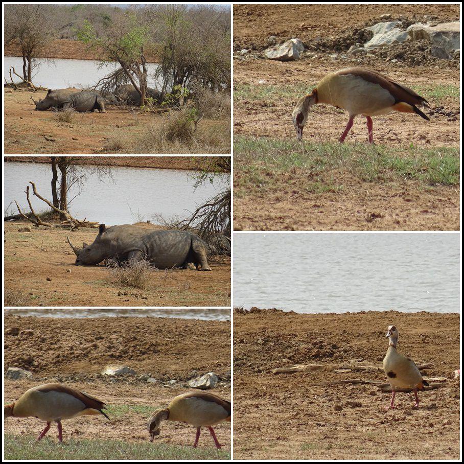 UN DIMANCHE EN ESWATINI (Ex Swaziland) : 2/3