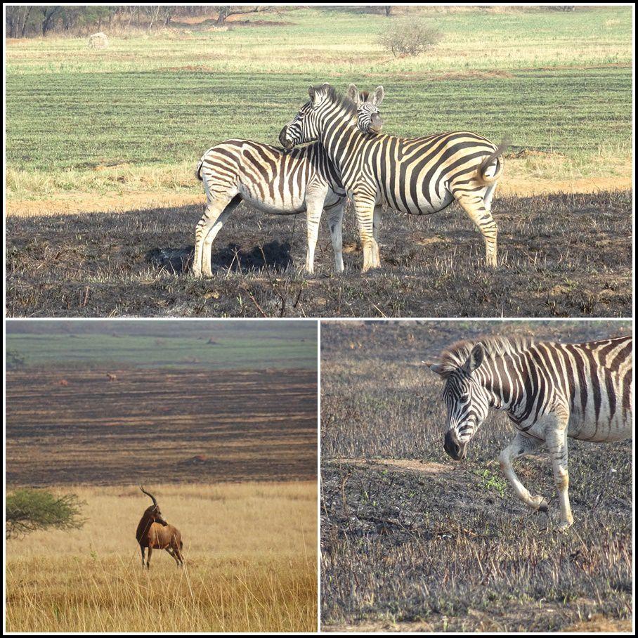 UN DIMANCHE EN ESWATINI (Ex Swaziland) 3/3 (Suite d'Afrique du Sud)