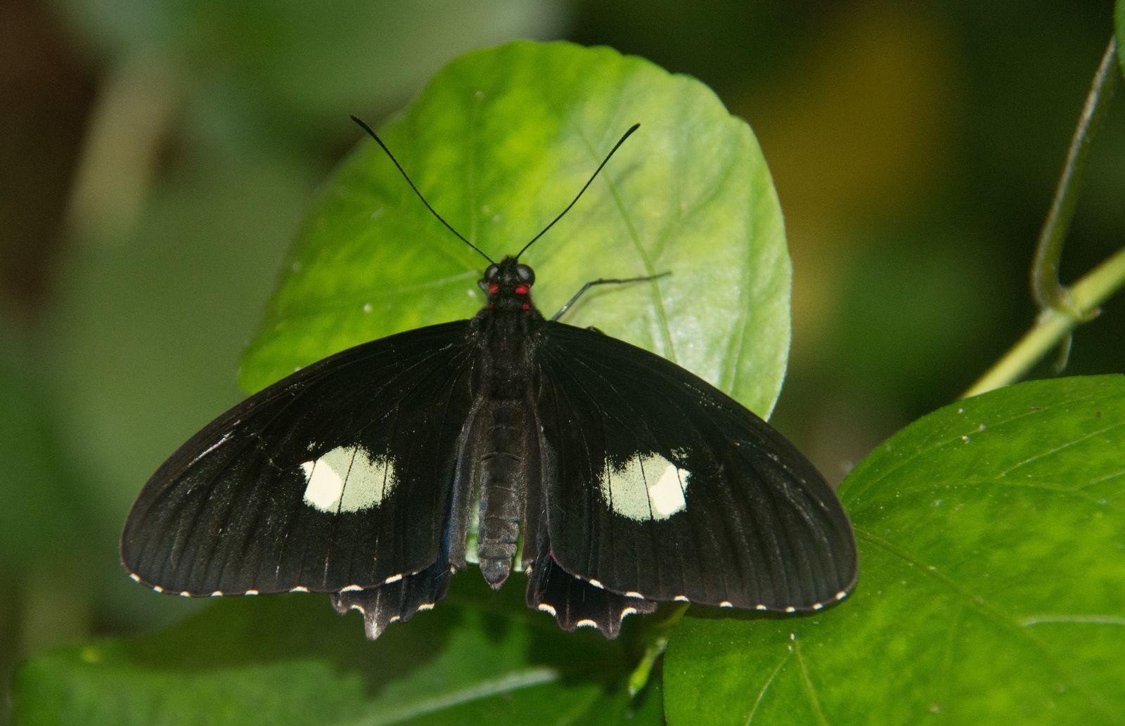 Best off papillons du monde