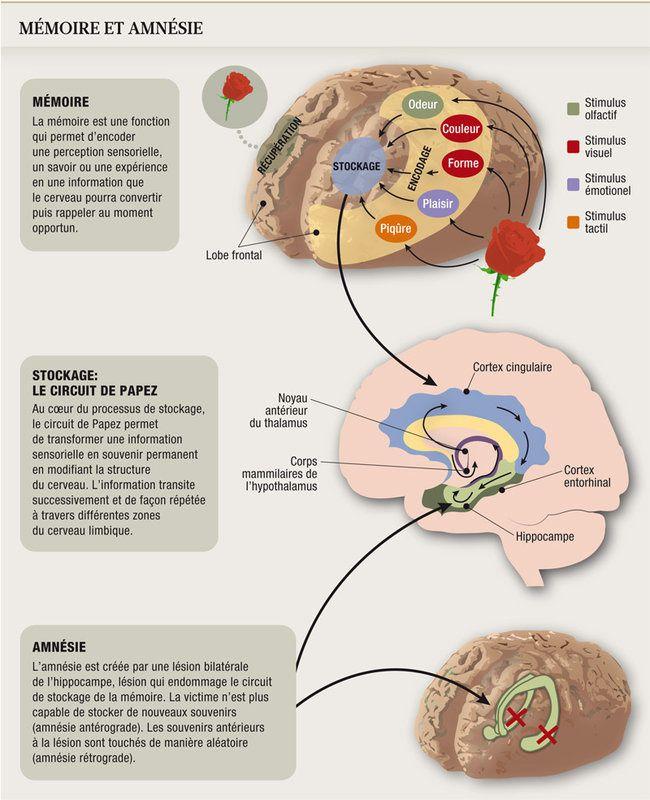 mémoire et amnésie