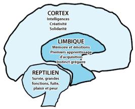 sur quelle partie du cerveau agissent les thérapies ?