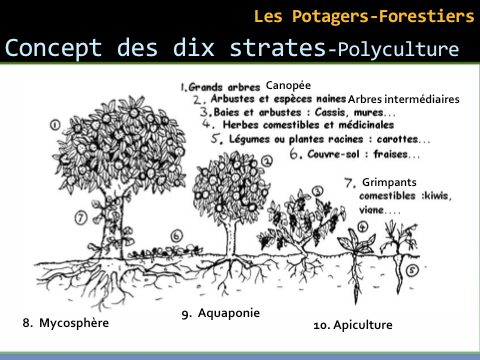 Polycultures salvatrices...