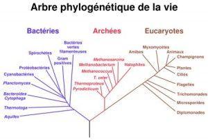 notre origine ontologique