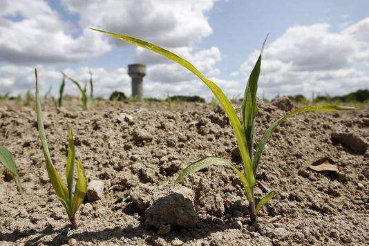 le béton est l'assassin des sols vivants. Qui va arrêter ce meurtrier ?