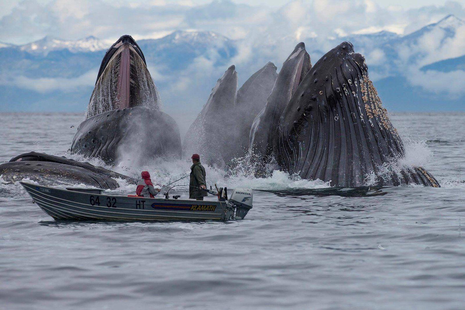 Pourquoi les baleines sont indispensables à l'Humanité ?
