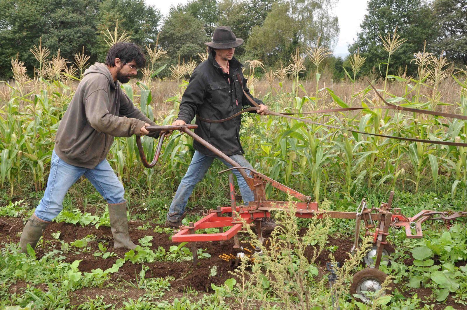 La permaculture n'est pas un commerce mais une économie ?