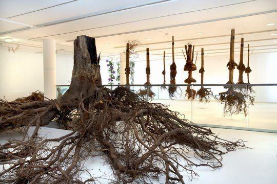 les racines seraient au musée ?