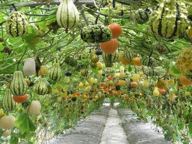 jardins semi-suspendus ?