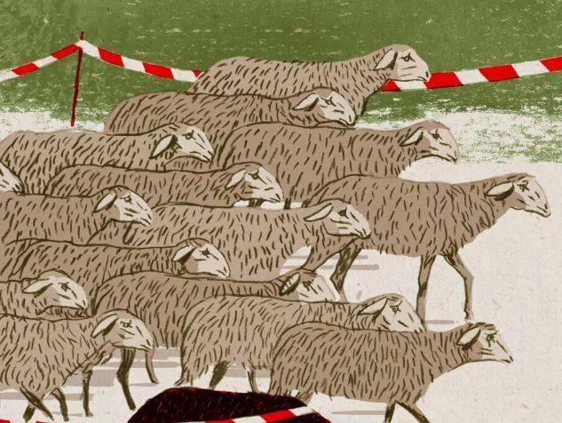 les moutons n'aiment pas la liberté des...autres.