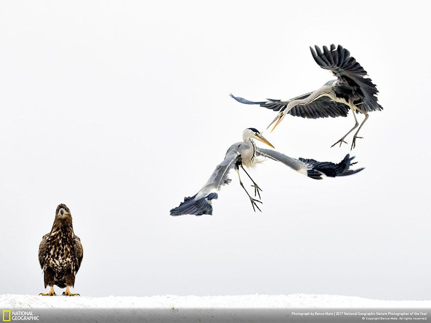 engueulades d'oiseaux ?