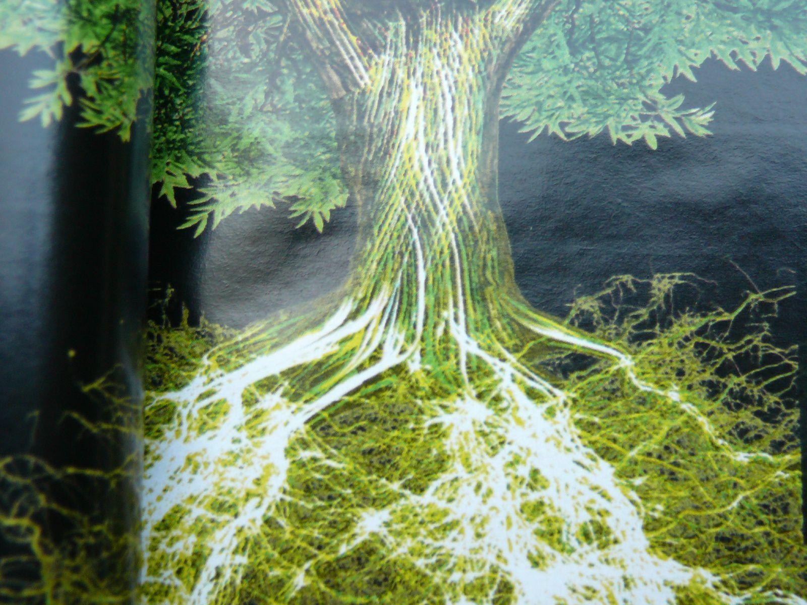 Lorsque les plantes ne se comprennent plus entre elles ?