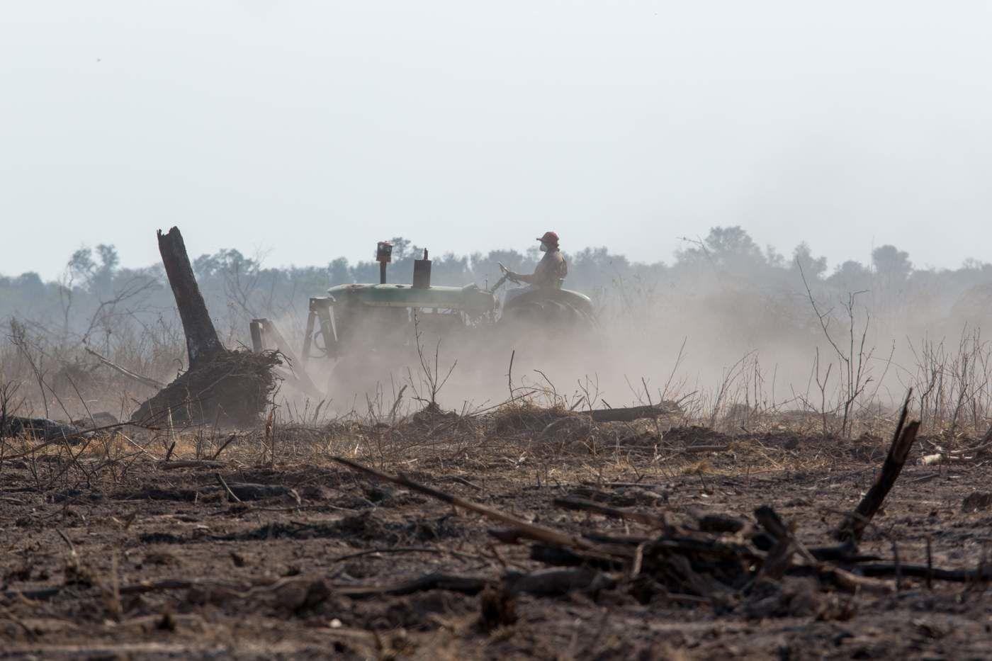 tracteur dégageant ce qu'il reste d'une forêt calcinée juste pour l'avidité des antisociaux marginaux capitalistes