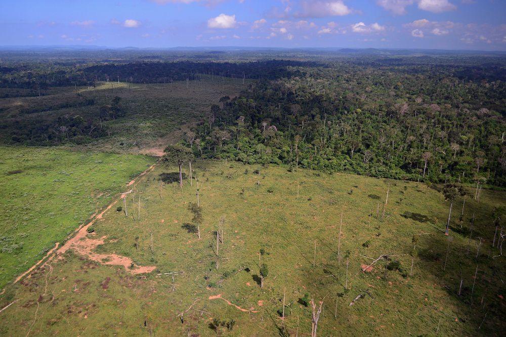 La mort de la forêt amazonienne pourrait être un des déclencheurs de l'irréversible : soit L'EMBALLEMENT climatique. Oui pendant que des coeurs plus secs que le déserts, et gavés de mauvaises volontés, font le bec difficile sur le « réchaffement » climatique, en est à…l'emballement qui va…tout emporter. Tout. Autant dire qu'ils sont largués tout comme les capitalistes fous, drogués jusqu'au pupille au « grigri » argent (ah oui ! le sorcier dit si t'as du pèze ça pèse pour que tout il le bien partout, c'est magique ! Cela c'est du grand « rationnel » - d'ailleurs il n'y a rien d'autre dans la fake théorie capitaliste !