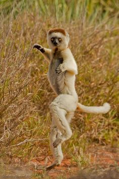 sur Pinterest…Kungfu baby animals…