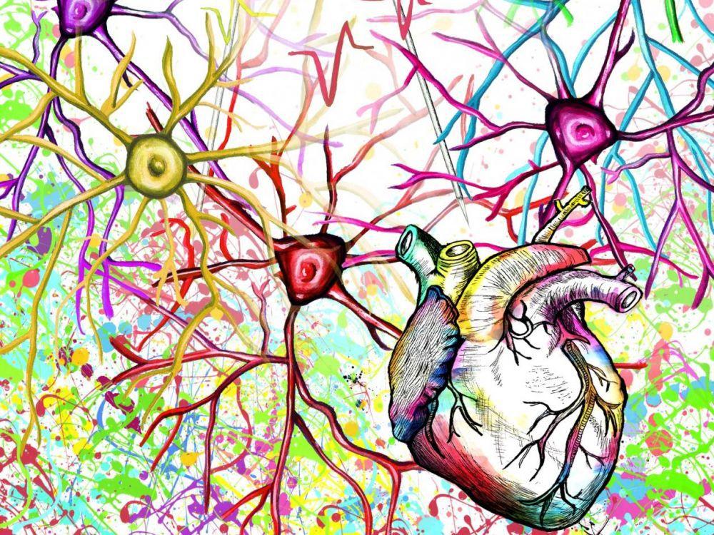 COSTAS ANASTASSIOU - Les battements du cœur déplacent le cerveau à l'intérieur du crâne