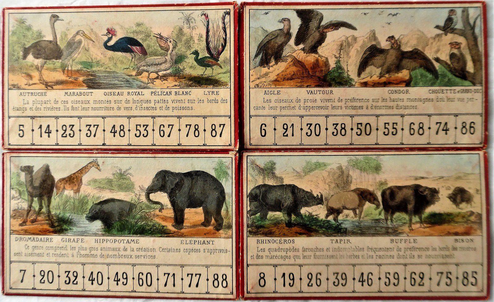 série des cartons du loto du jeune naturaliste
